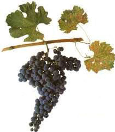 Picture for category Merlot