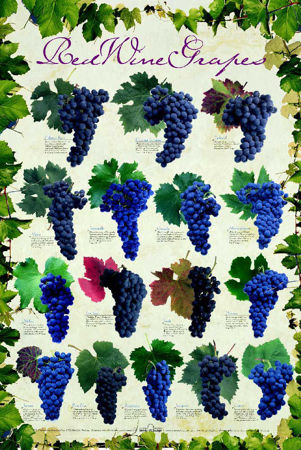 Picture for category Grapes - Red
